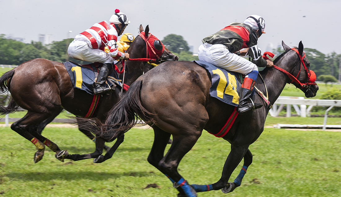 A Complete Guide On How To Bet On Horse Racing